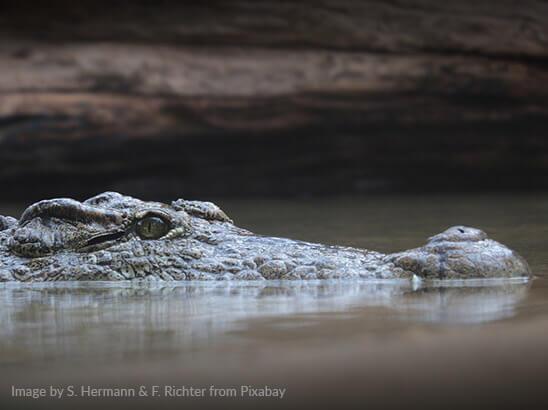 Be aware of crocodiles (often hidden) in the water
