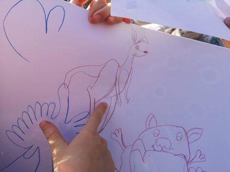 kevin-the-kangaroo-book-australian-animals-drawings